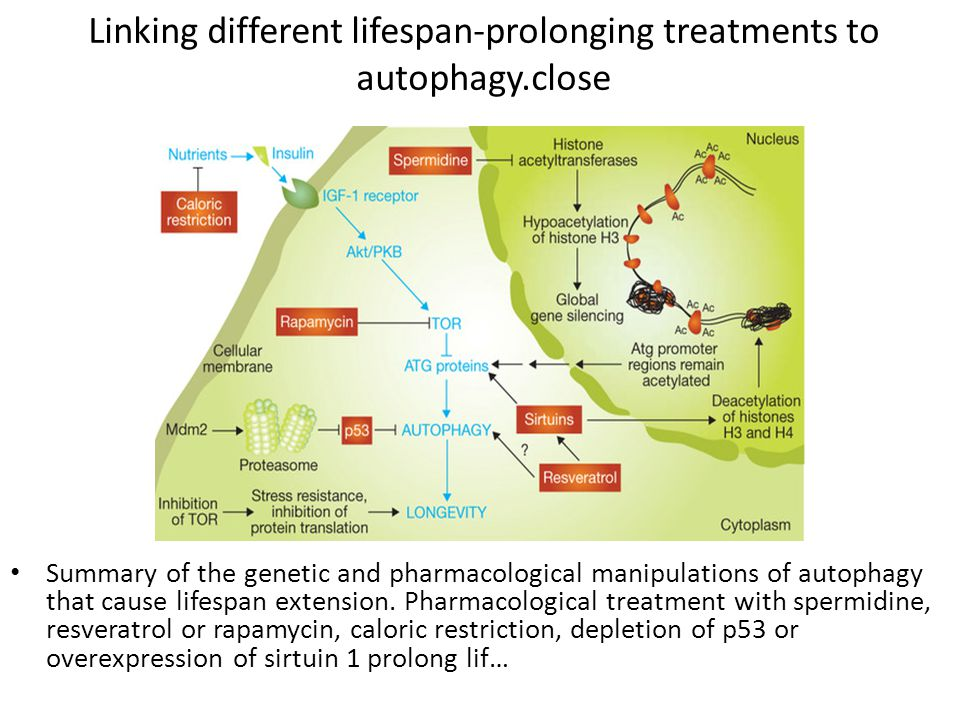 Linking different lifespan-prolonging treatments to autophagy.close