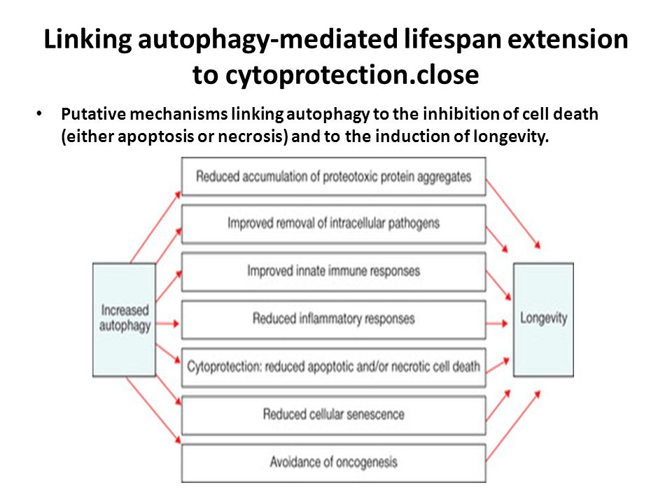 Linking autophagy-mediated lifespan extension to cytoprotection.close