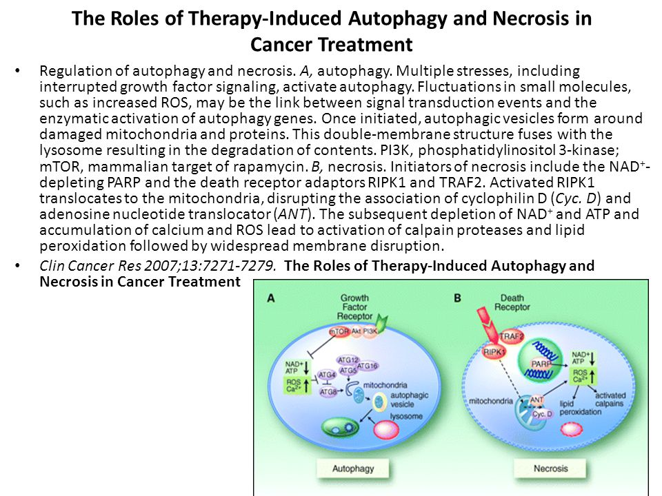 The Roles of Therapy-Induced Autophagy and Necrosis in Cancer Treatment