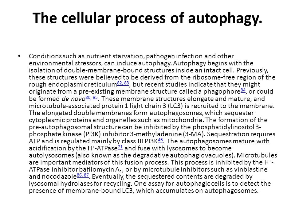 The cellular process of autophagy.