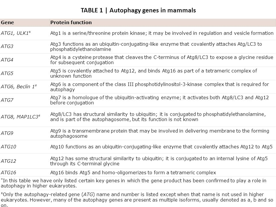 TABLE 1 | Autophagy genes in mammals