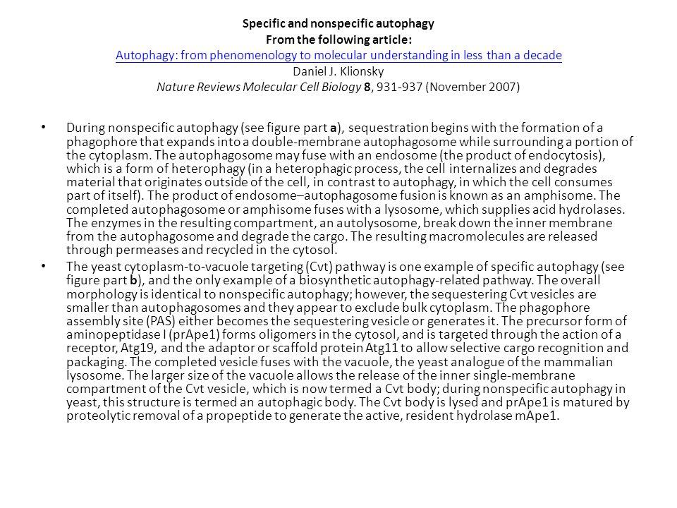 Specific and nonspecific autophagy From the following article: Autophagy: from phenomenology to molecular understanding in less than a decade Daniel J. Klionsky Nature Reviews Molecular Cell Biology 8, 931-937 (November 2007)