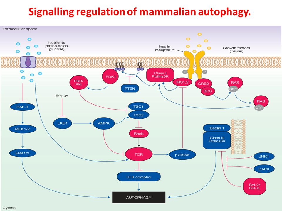 Signalling regulation of mammalian autophagy.