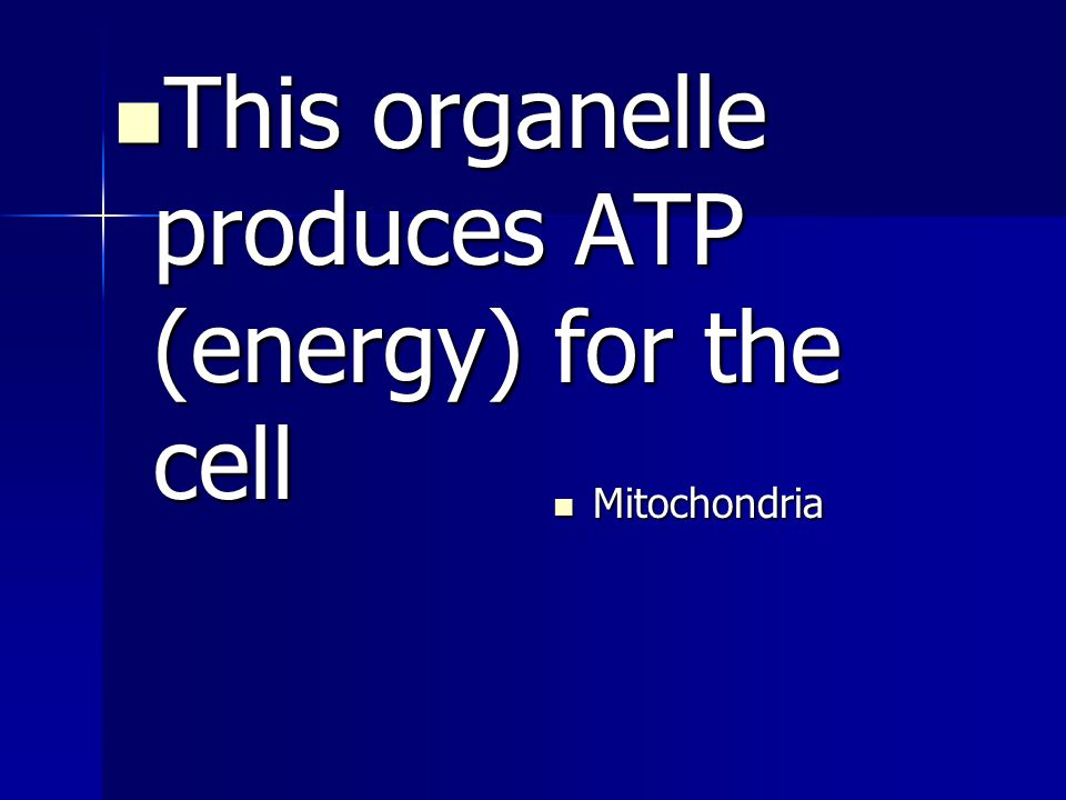 This organelle produces ATP (energy) for the cell