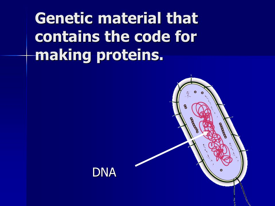 Genetic material that contains the code for making proteins.