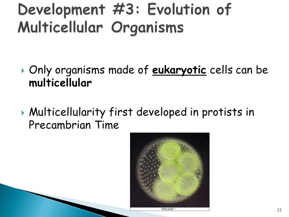 Development #3: Evolution of Multicellular Organisms