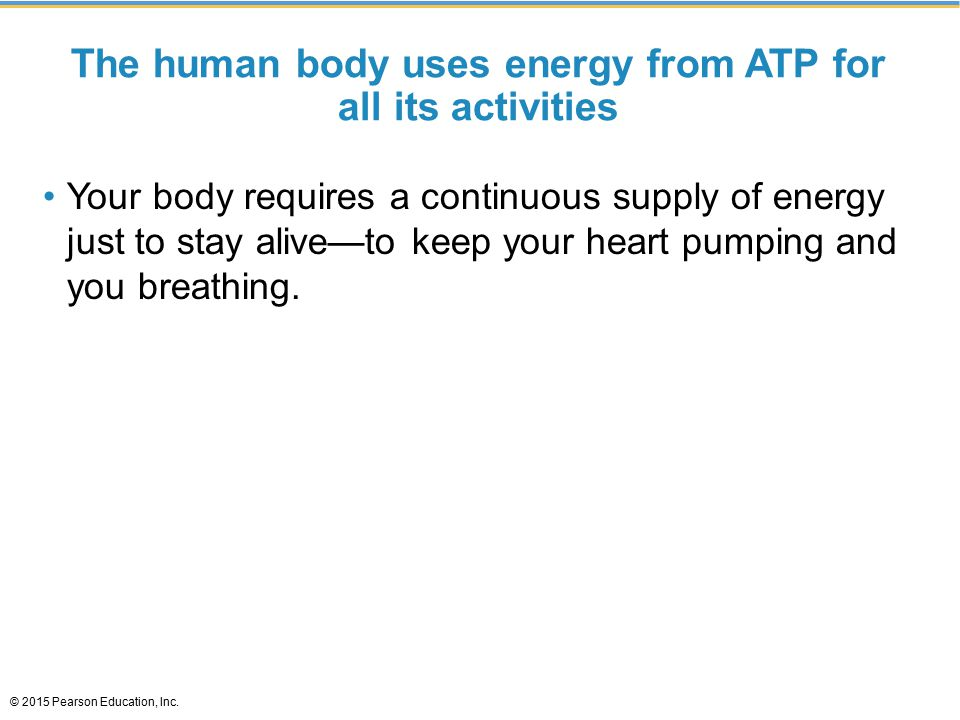 The human body uses energy from ATP for all its activities