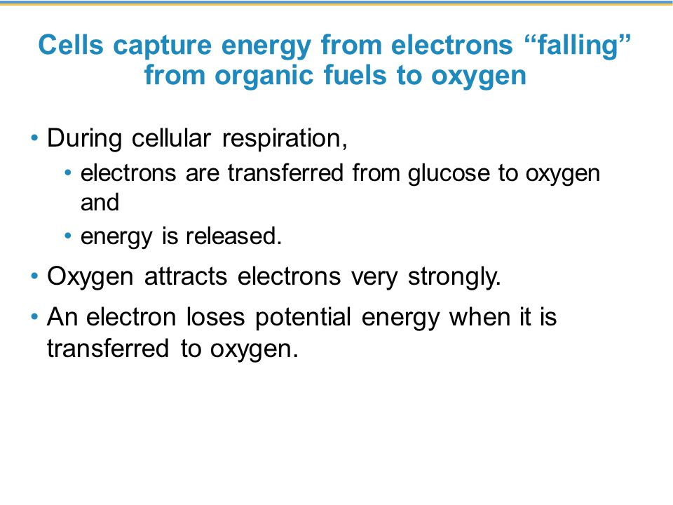 Cells capture energy from electrons falling from organic fuels to oxygen