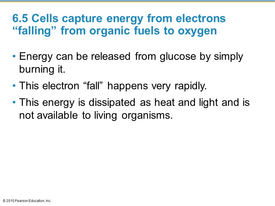 6.5 Cells capture energy from electrons falling from organic fuels to oxygen