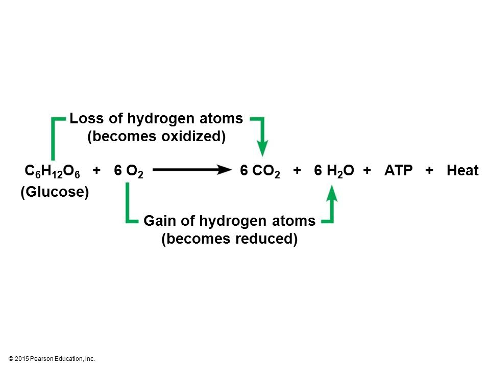 Loss of hydrogen atoms (becomes oxidized)