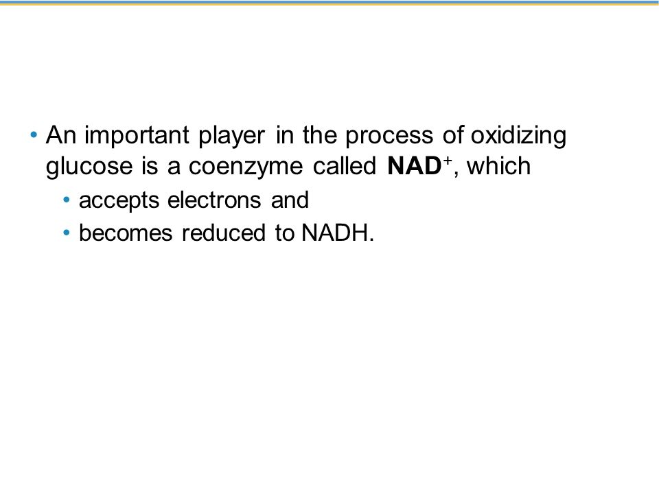 An important player in the process of oxidizing glucose is a coenzyme called NAD+, which