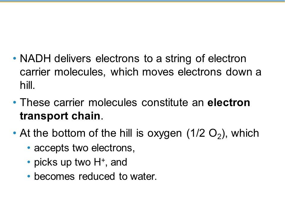 These carrier molecules constitute an electron transport chain.