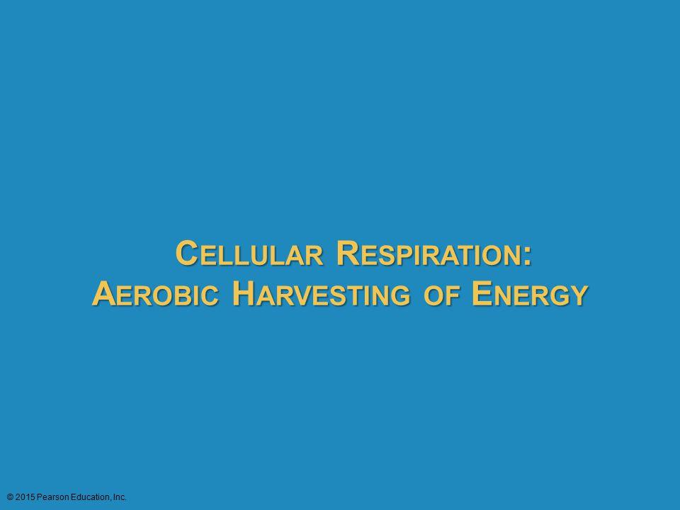 Cellular Respiration: Aerobic Harvesting of Energy