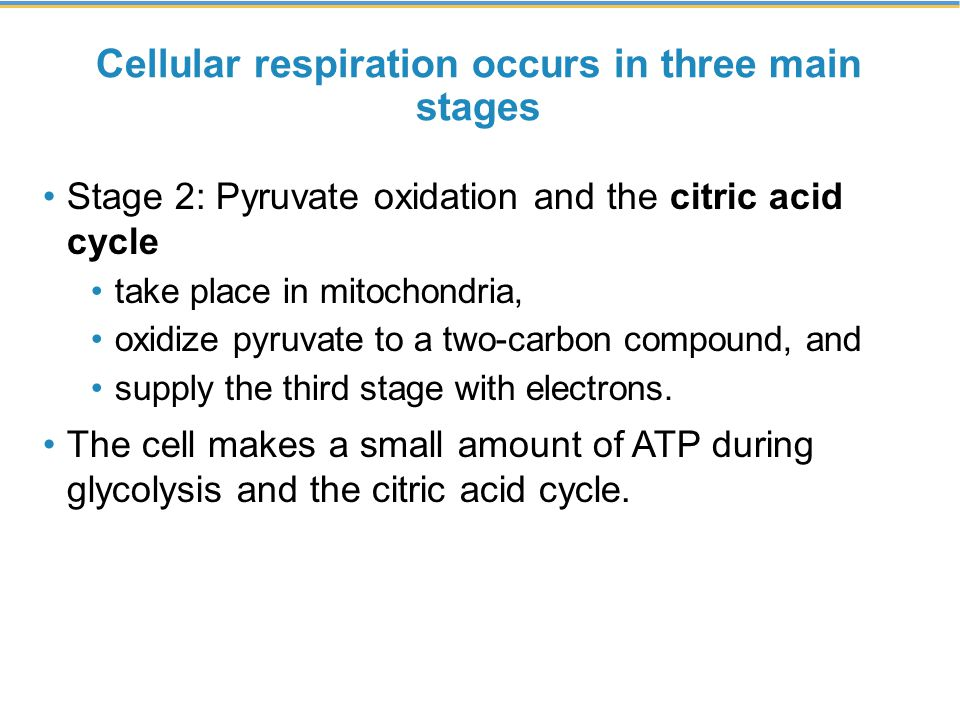 Cellular respiration occurs in three main stages