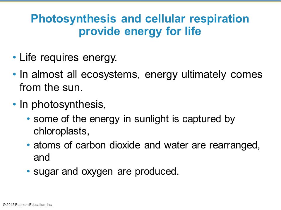 Photosynthesis and cellular respiration provide energy for life