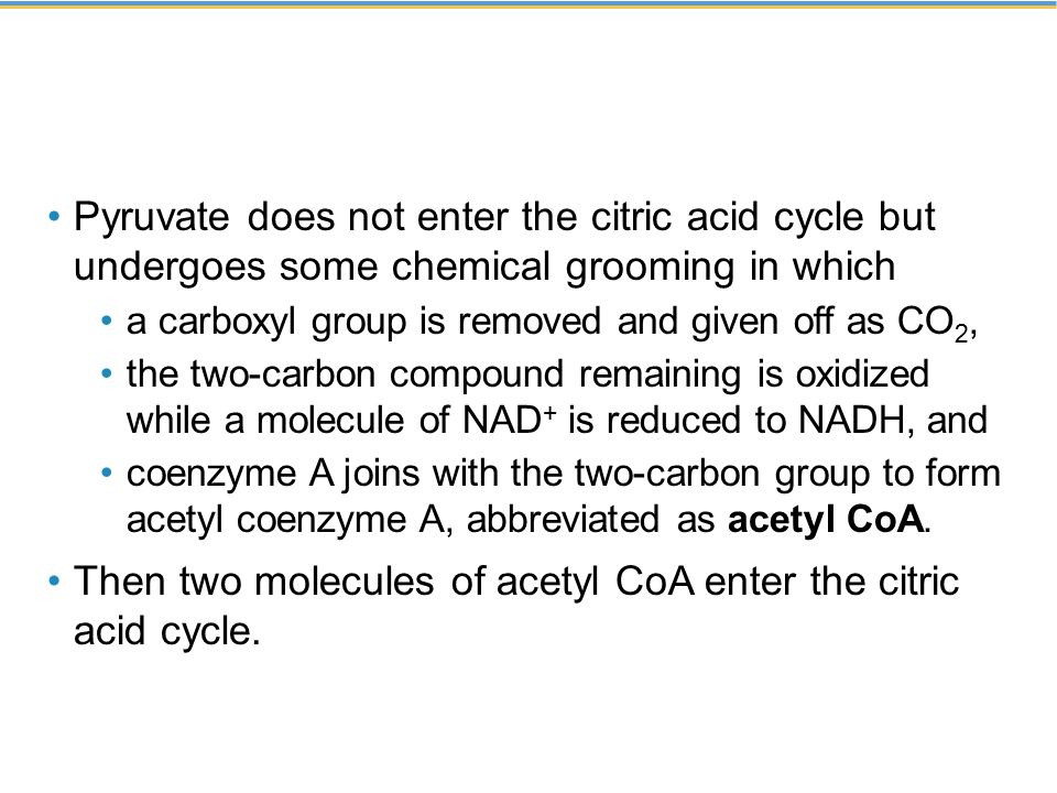 Then two molecules of acetyl CoA enter the citric acid cycle.