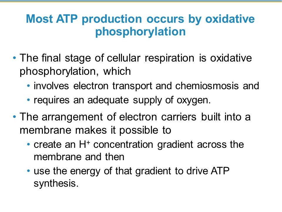 Most ATP production occurs by oxidative phosphorylation