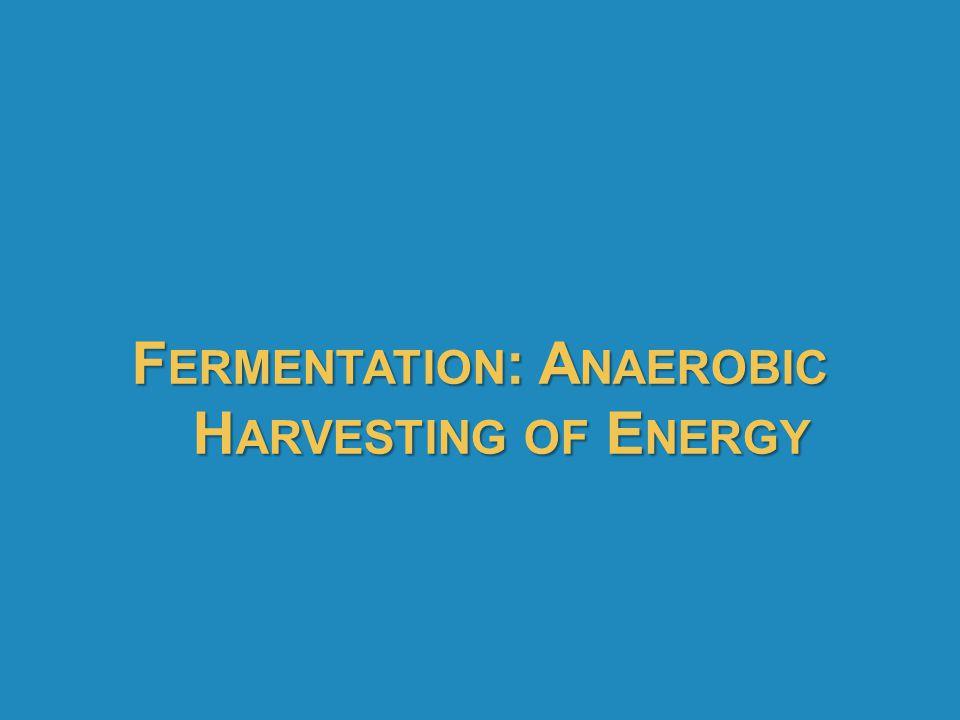 Fermentation: Anaerobic Harvesting of Energy