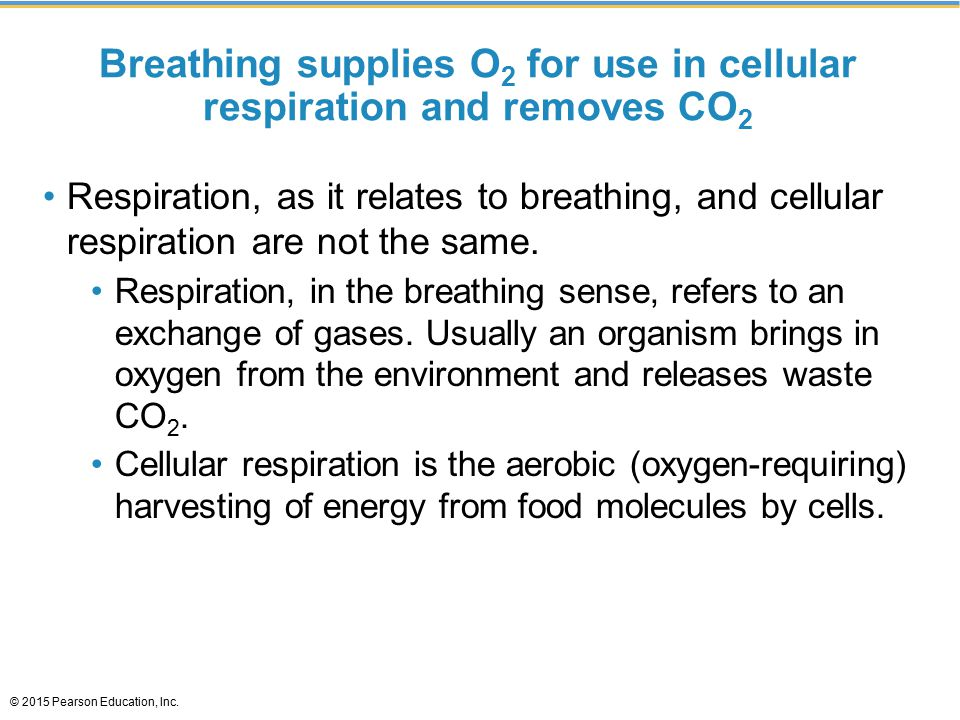 Breathing supplies O2 for use in cellular respiration and removes CO2