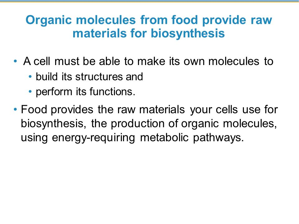 Organic molecules from food provide raw materials for biosynthesis
