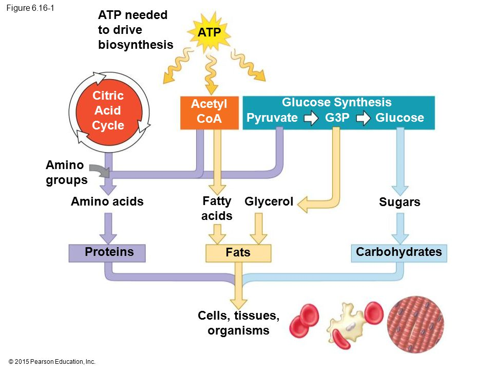 Cells, tissues, organisms