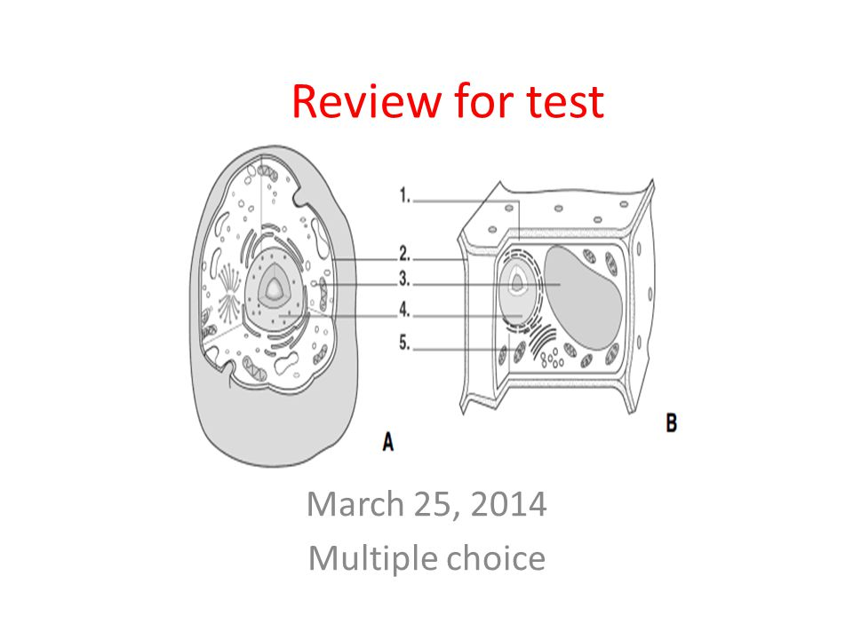 Review for test March 25, 2014 Multiple choice