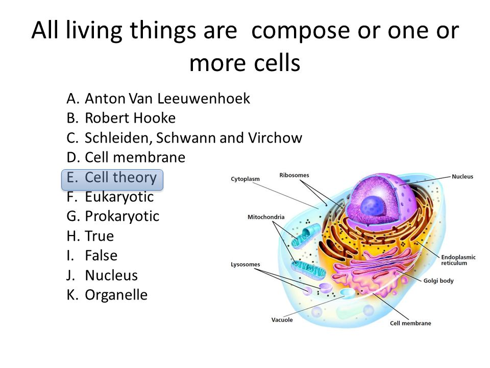 All living things are compose or one or more cells