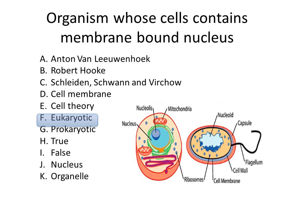 Organism whose cells contains membrane bound nucleus