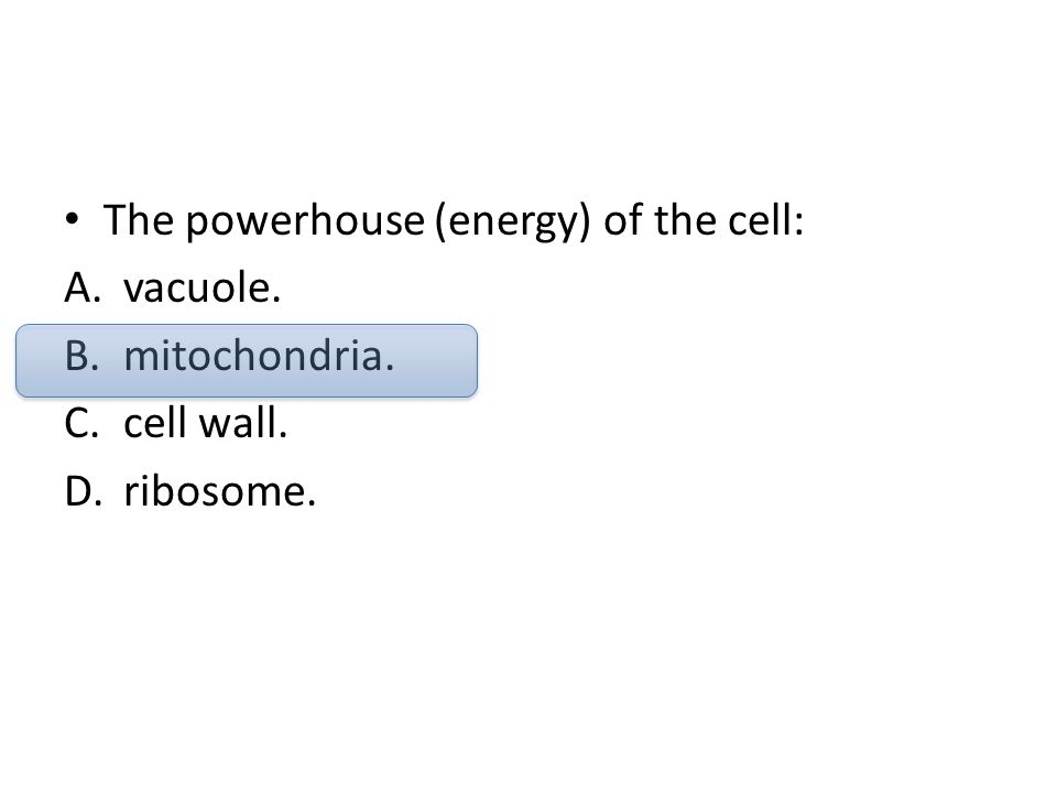 The powerhouse (energy) of the cell: