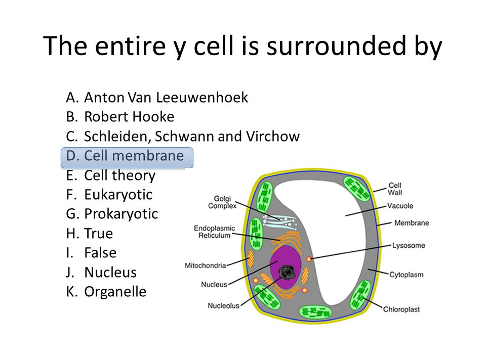 The entire y cell is surrounded by