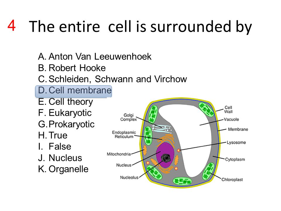The entire cell is surrounded by