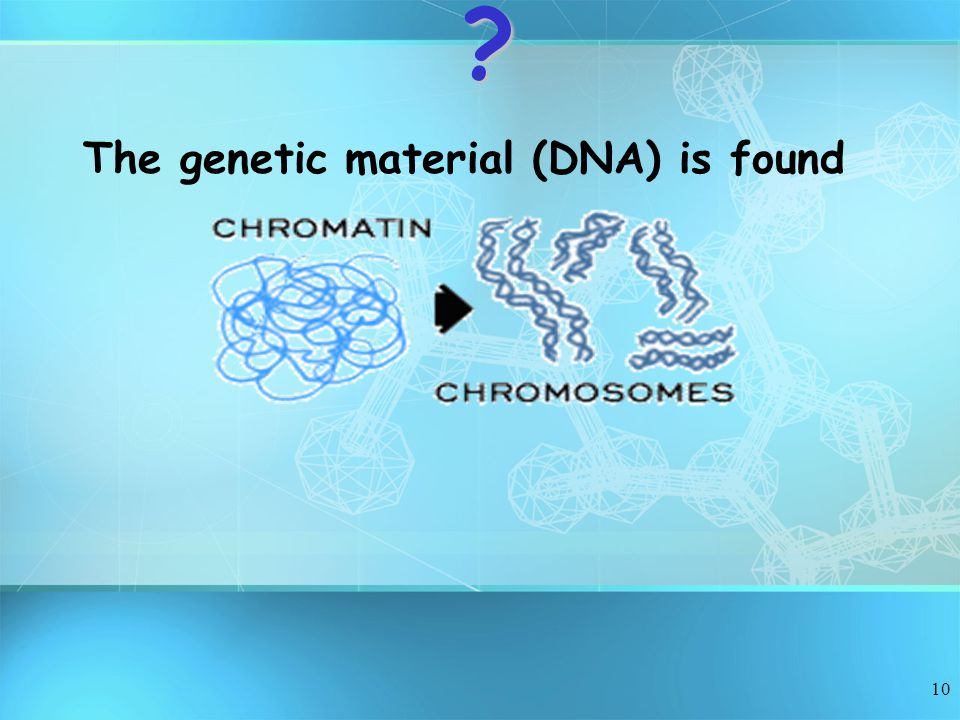 The genetic material (DNA) is found