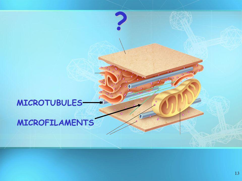 MICROTUBULES MICROFILAMENTS