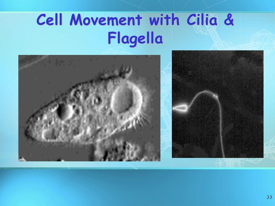 Cell Movement with Cilia & Flagella