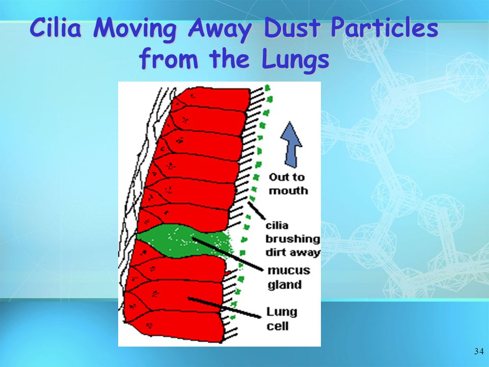 Cilia Moving Away Dust Particles from the Lungs