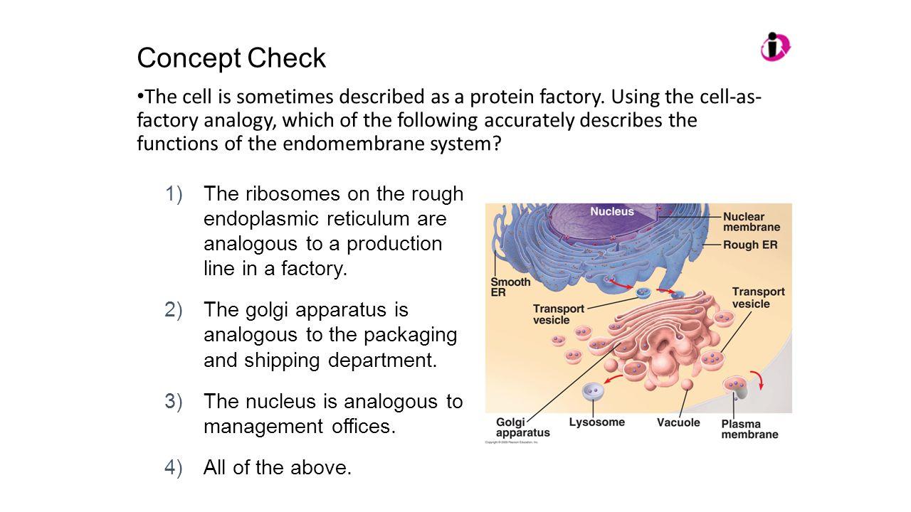 ap bio concept checks 1 1 and