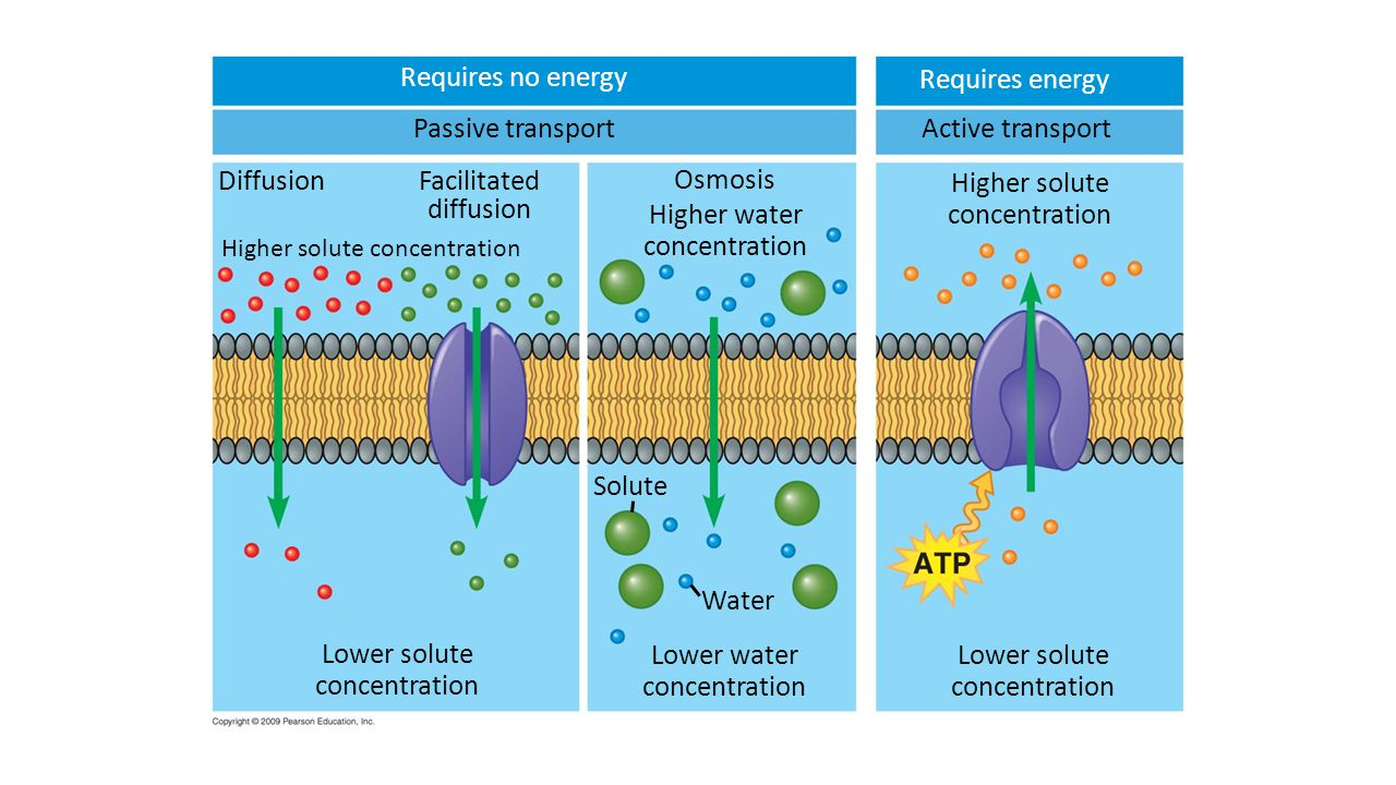 Requires no energy Requires energy Passive transport Active transport
