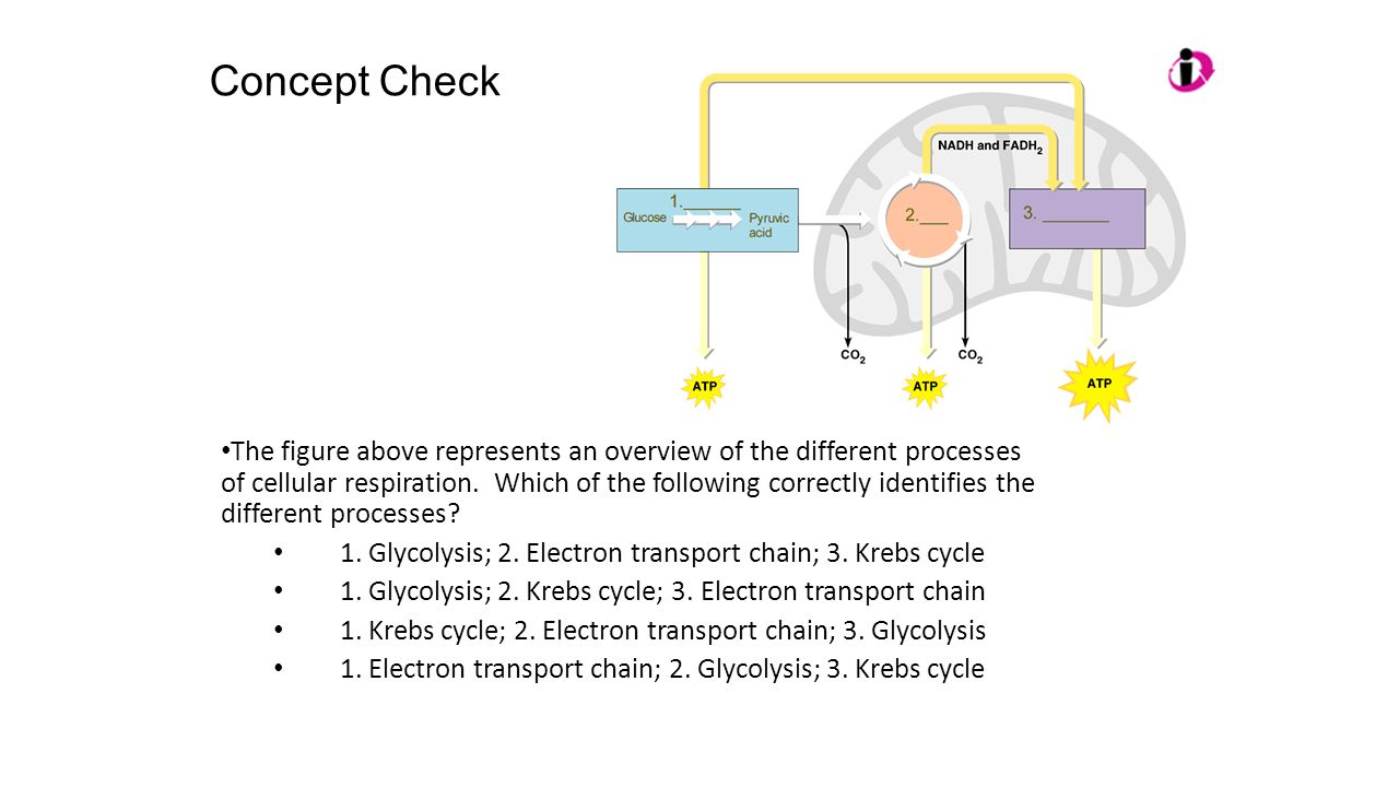 Ap biology review session 2 ppt video online download 29 concept pooptronica Choice Image