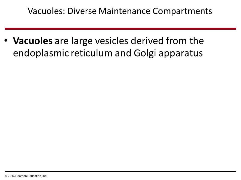 Vacuoles: Diverse Maintenance Compartments