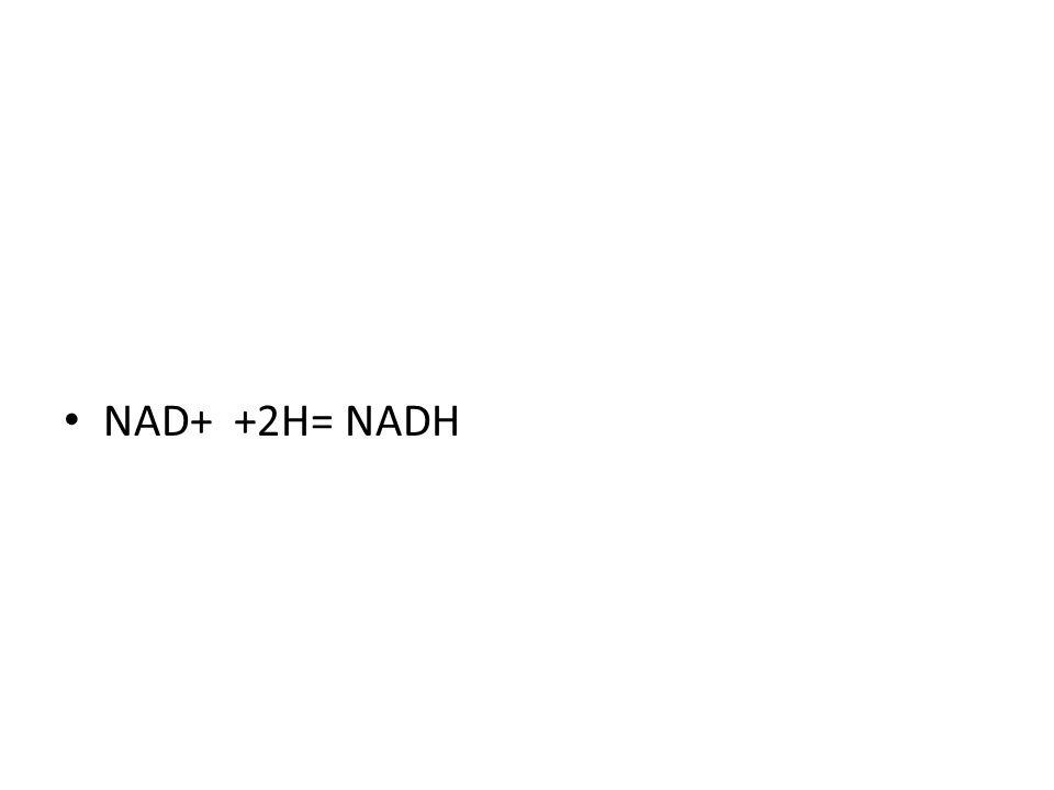 NAD+ +2H= NADH