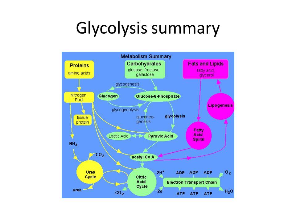 Glycolysis summary