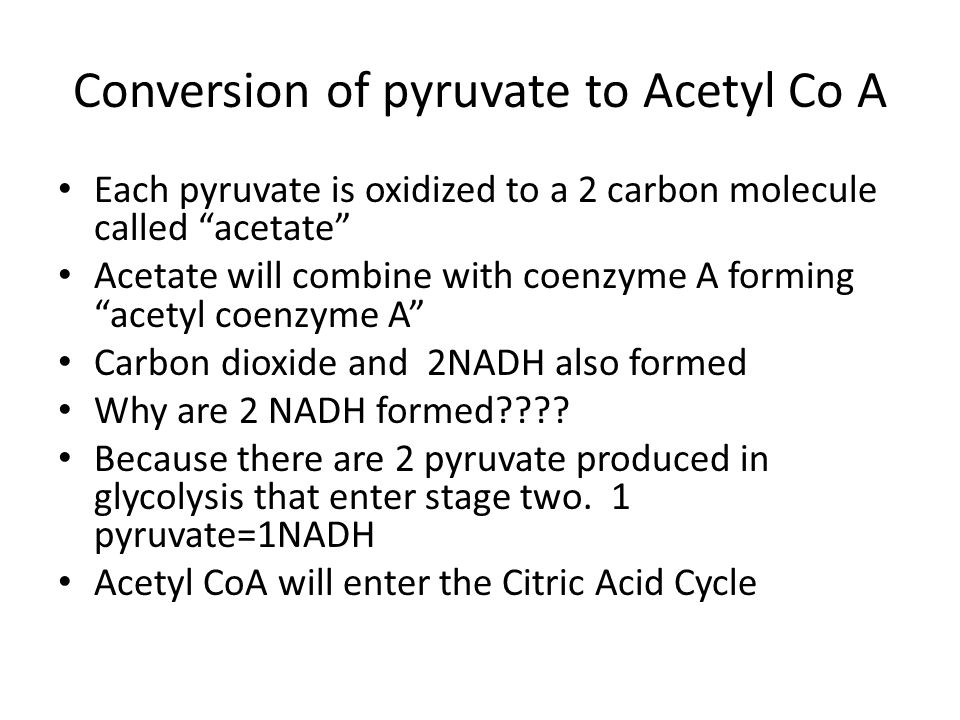 Conversion of pyruvate to Acetyl Co A
