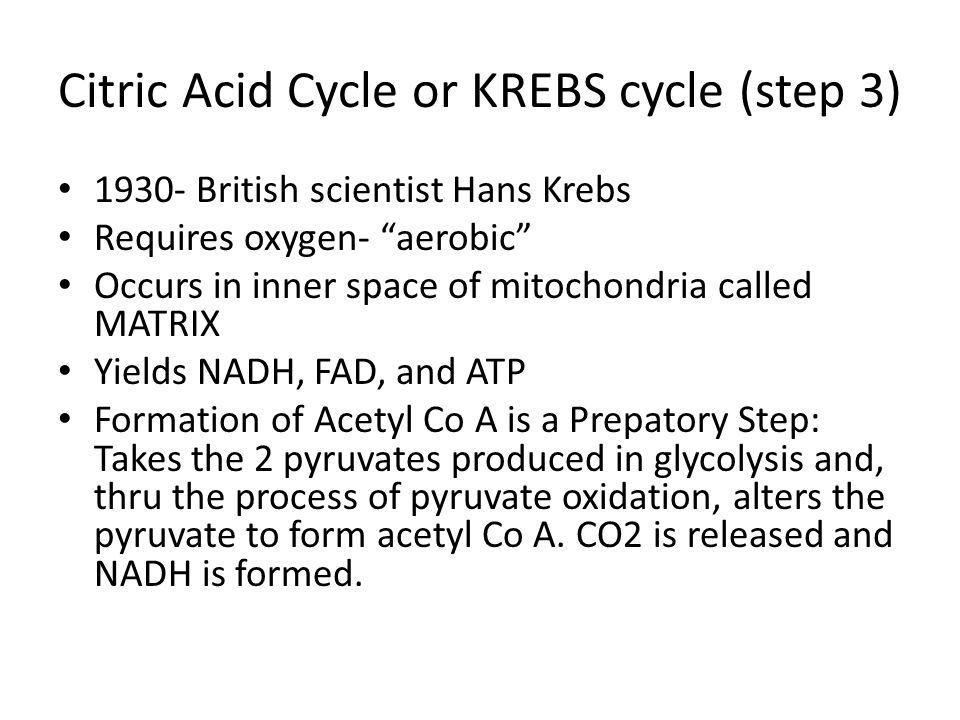 Citric Acid Cycle or KREBS cycle (step 3)