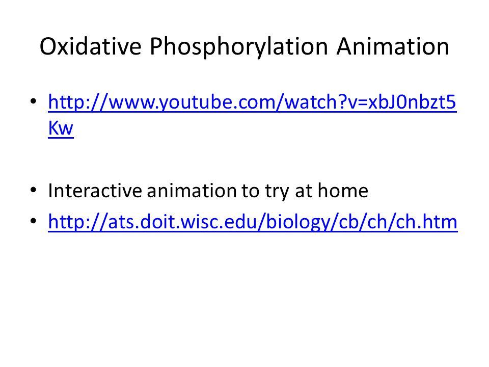 Oxidative Phosphorylation Animation