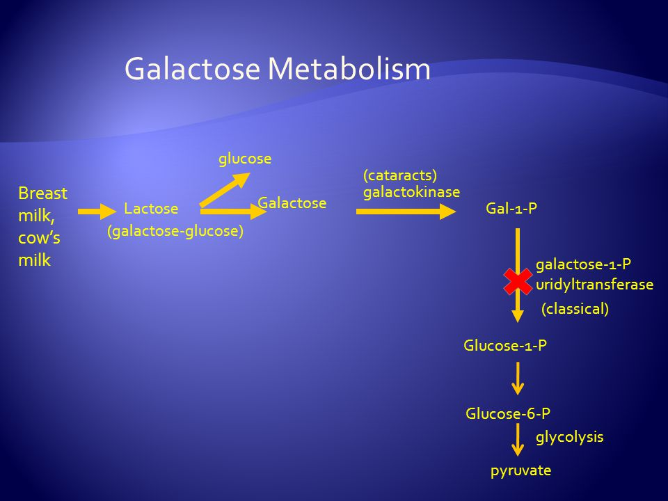 Galactose Metabolism Breast milk, cow's milk glucose (cataracts)