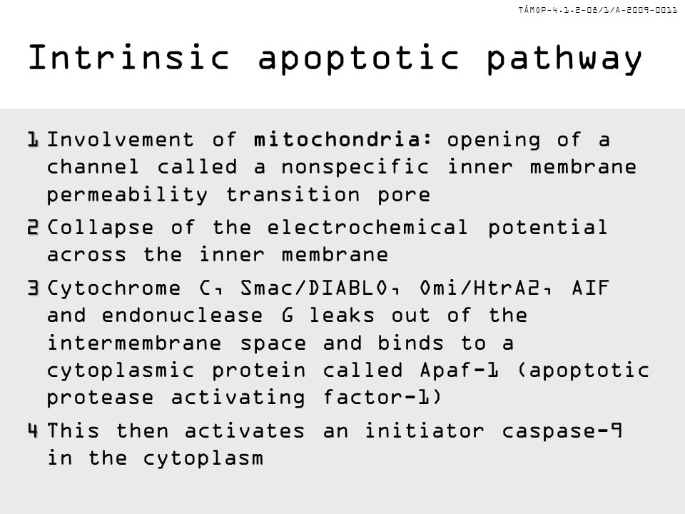 Intrinsic apoptotic pathway