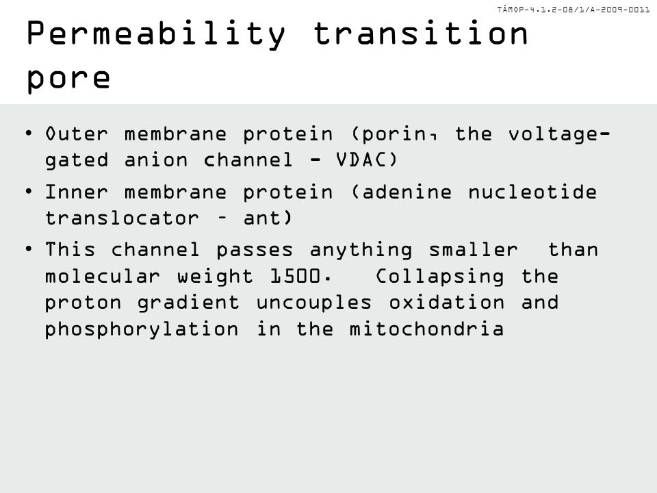 Permeability transition pore