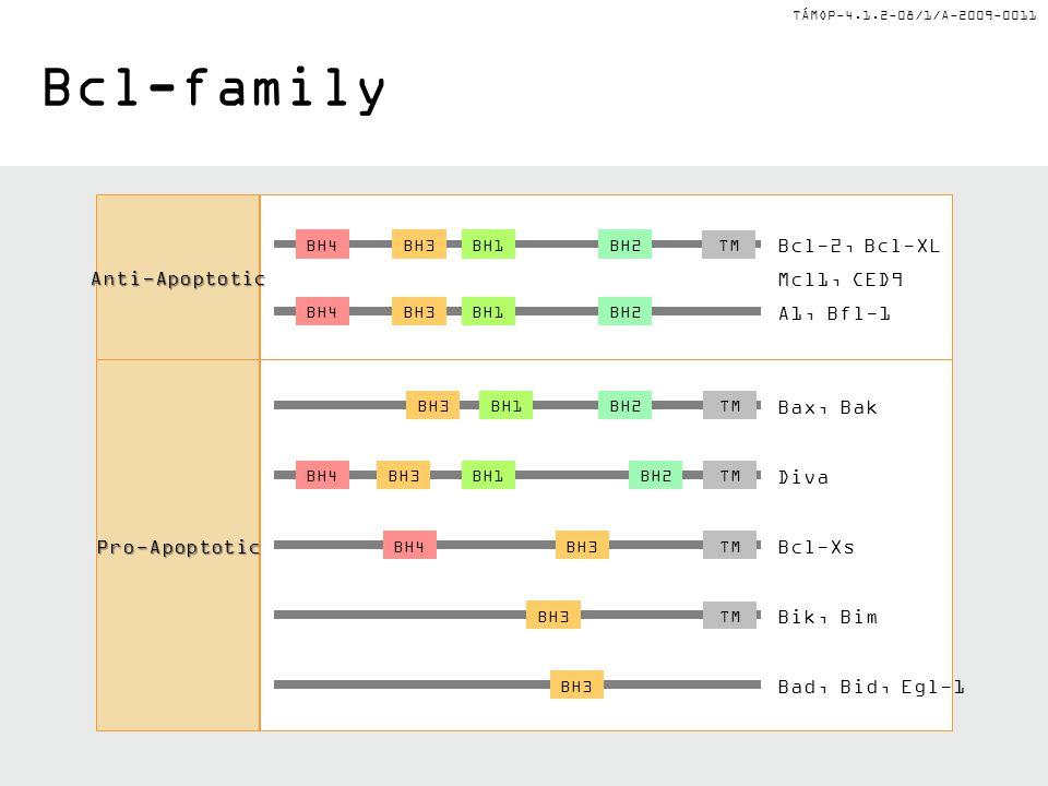 Bcl-family Anti-Apoptotic Bcl-2, Bcl-XL Bax, Bak Diva Bcl-Xs Bik, Bim