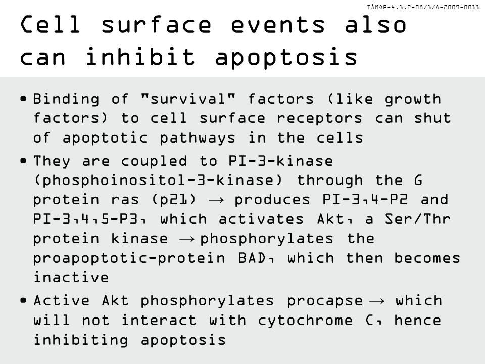 Cell surface events also can inhibit apoptosis