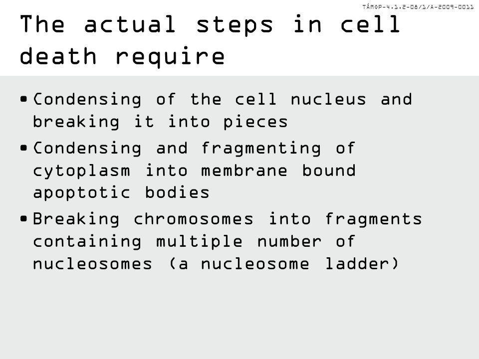 The actual steps in cell death require